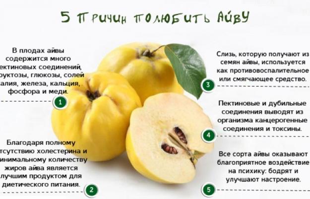 айва полезные свойства и противопоказания для женщин рецепты