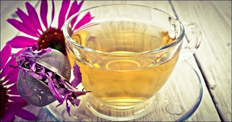 чай из эхинацеи польза и вред