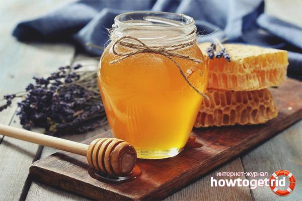 чем полезен пчелиный мед и как правильно принимать