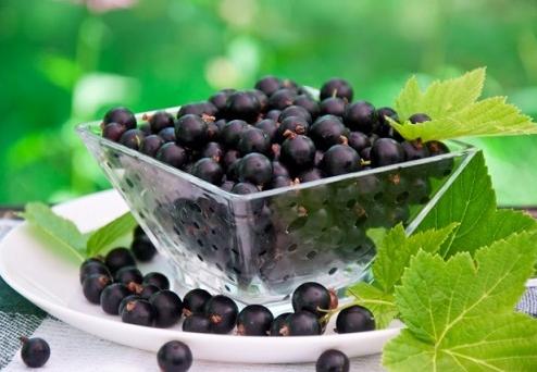 черная смородина протертая с сахаром на зиму полезные свойства