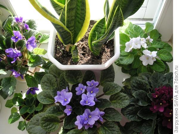 цветы в детскую комнату для самых маленьких полезные свойства