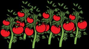 для чего полезен томатный сок для женщины