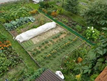 хвоя сосны полезные свойства и противопоказания для почвы