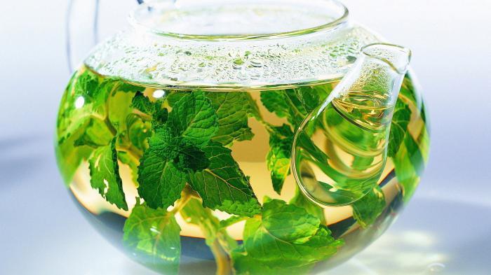 как заваривать чай с мятой полезные свойства и противопоказания