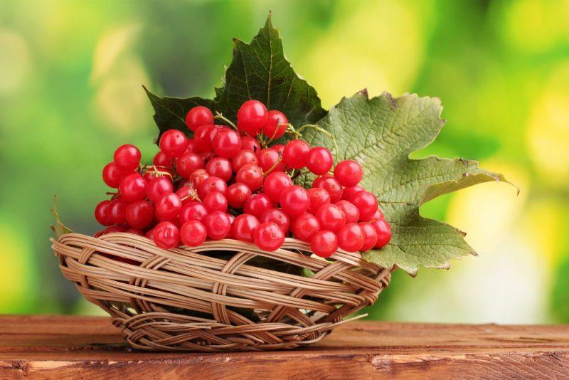калина красная полезные свойства и противопоказания рецепты приготовления