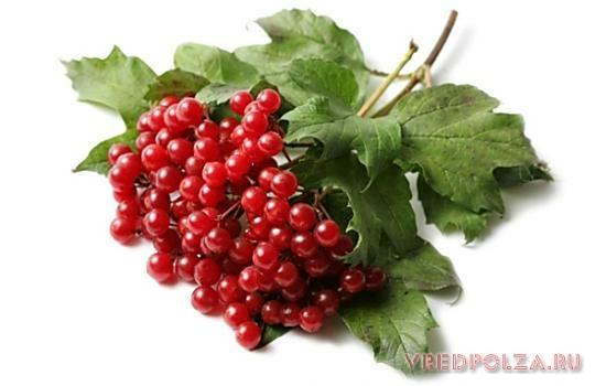 калина красная протертая с сахаром полезные свойства и противопоказания