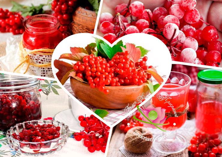 калина красная рецепты на зиму заготовки калины полезные свойства