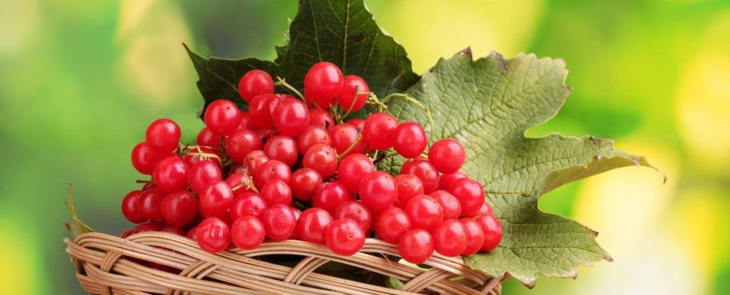 калина красная ягода полезные свойства рецепты при диабете