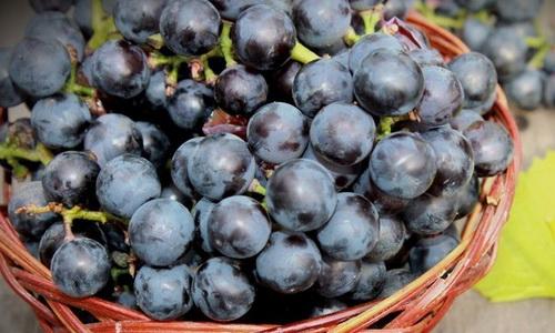компот из винограда польза и вред