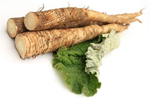 корень лопуха при мастопатии полезные свойства и противопоказания