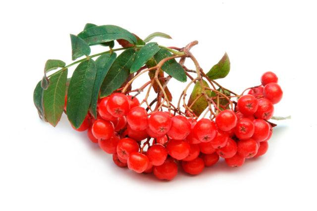 красная рябина с медом полезные свойства и противопоказания