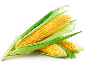 кукуруза при беременности вред и польза