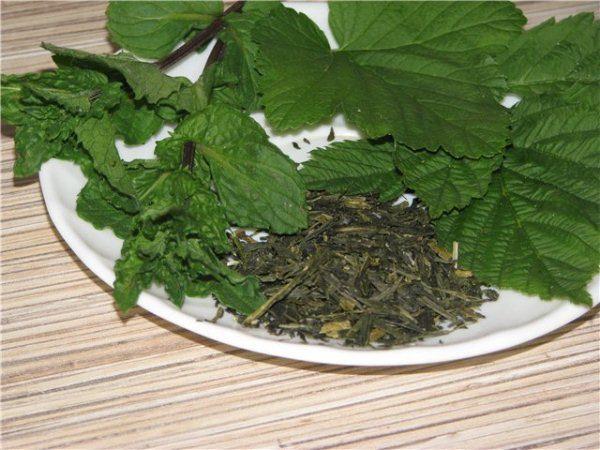 листья смородины полезные свойства и противопоказания для мужчин