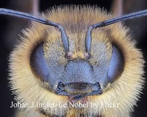 маточное молочко пчелиное полезные свойства для мужчин как принимать