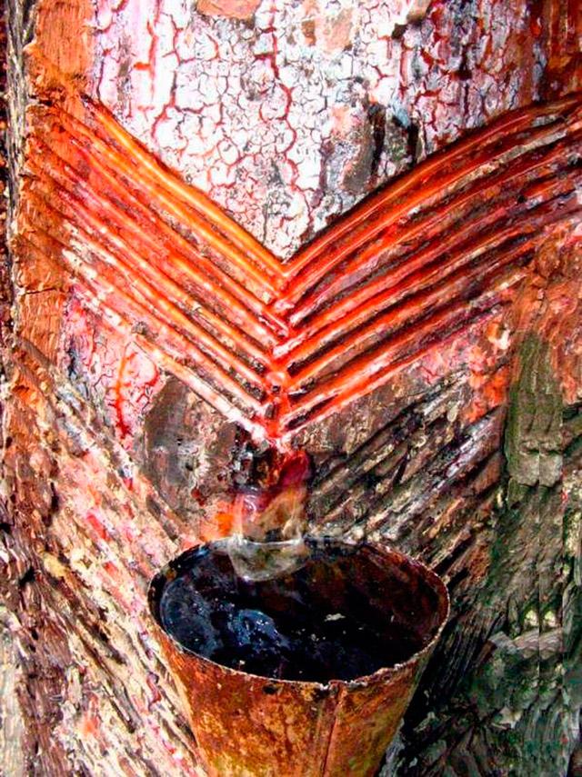 мазь восковая на кедровой живице с пчелиным подмором полезные свойства