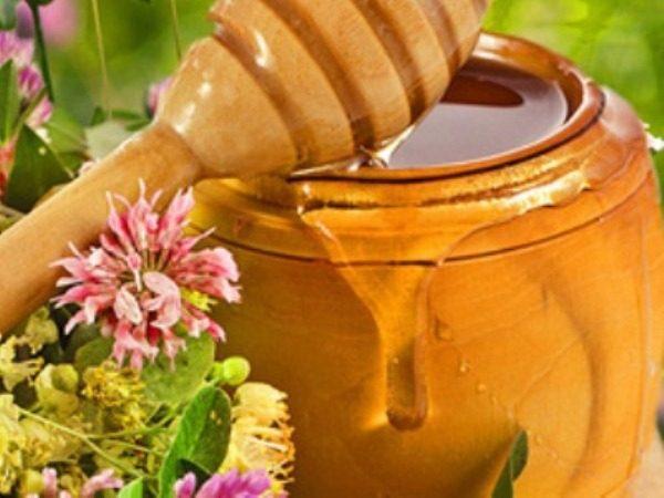 мед из белого клевера полезные свойства и противопоказания