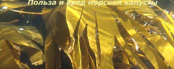 морская капуста польза и вред лечебные