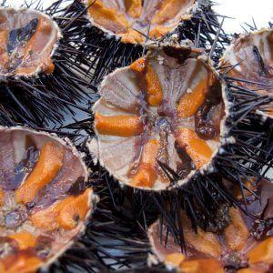настойка из морского ежа на спирту полезные свойства