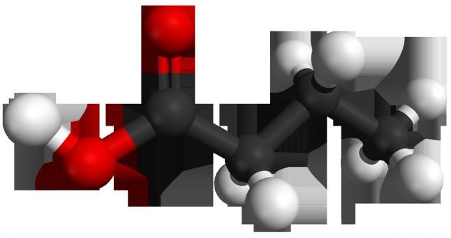 насыщенные жирные кислоты польза и вред
