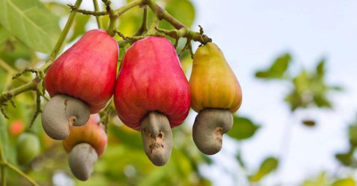 орехи кешью полезные свойства как принимать нужно ли жарить