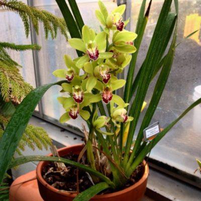 орхидея польза или вред для дома