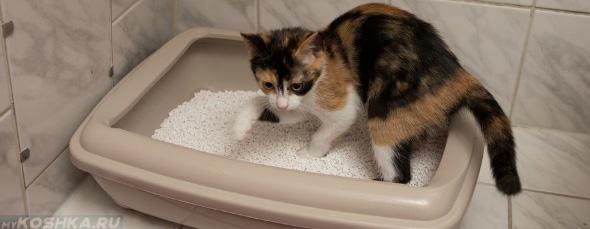 отвар ромашки для кошки польза и вред