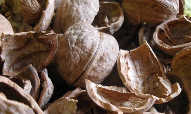 отвар скорлупы грецкого ореха полезные свойства и противопоказания