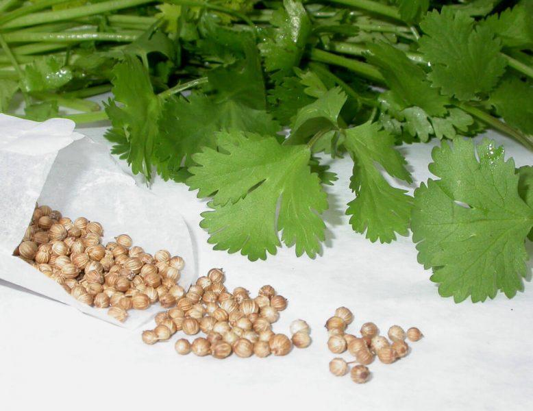 петрушка полезные свойства и противопоказания для мужчин для женщин рецепты