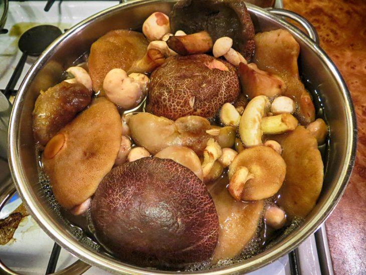 польза и вред лесных грибов для человека