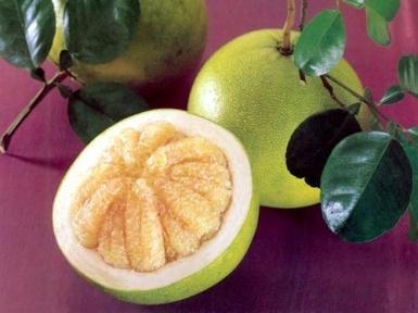 помело фрукт полезные свойства и вред где и как растет