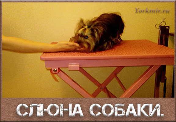 слюна собаки для человека польза и вред