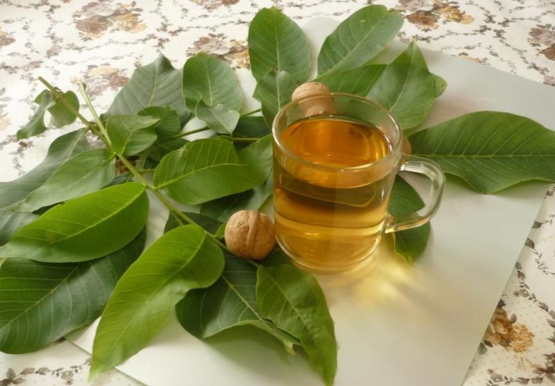 сушеные листья грецкого ореха польза и вред