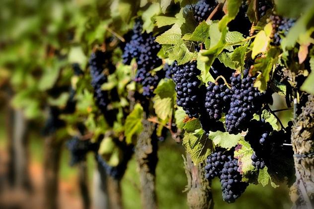 виноград для беременных польза или вред