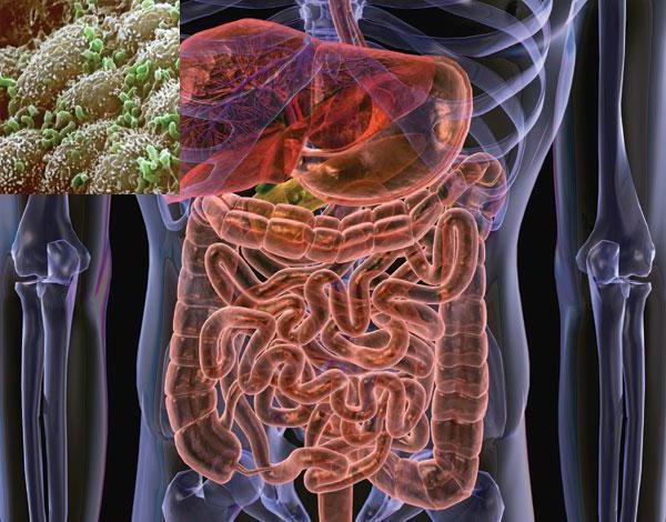 бактерии вред и польза для человека