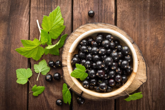 чай из веток смородины полезные свойства и противопоказания