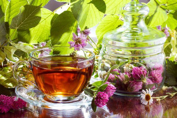 чай с клевером польза и вред