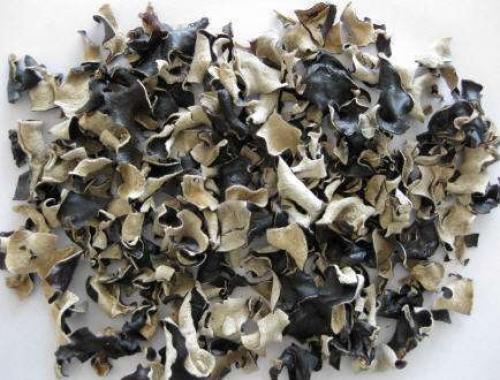 древесные черные грибы польза и вред
