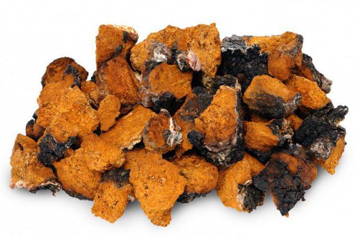 гриб чага полезные свойства и противопоказания при онкологии