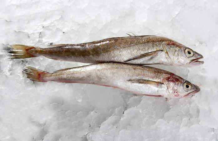 хе из рыбы польза и вред