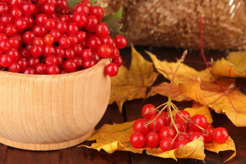 калина красная полезные свойства и противопоказания для мужчин