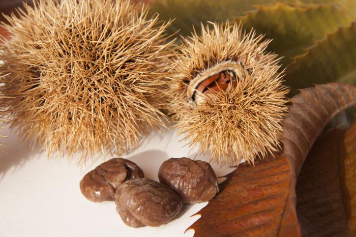 каштан орех полезные свойства настойка на водке
