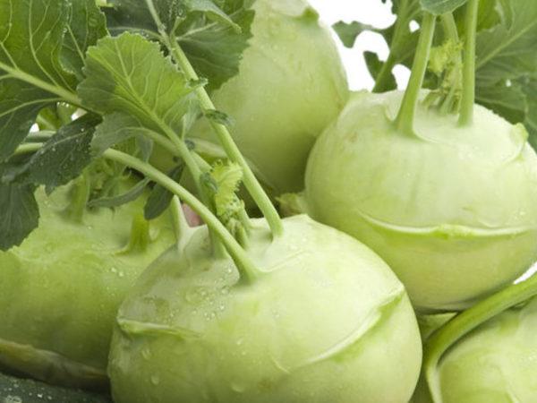 кольраби капуста полезные свойства при раке молочной железы