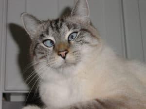 кошки и валерьянка польза и вред