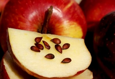 косточки в яблоках польза и вред