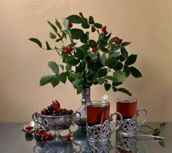 листья шиповника полезные свойства и противопоказания рецепты