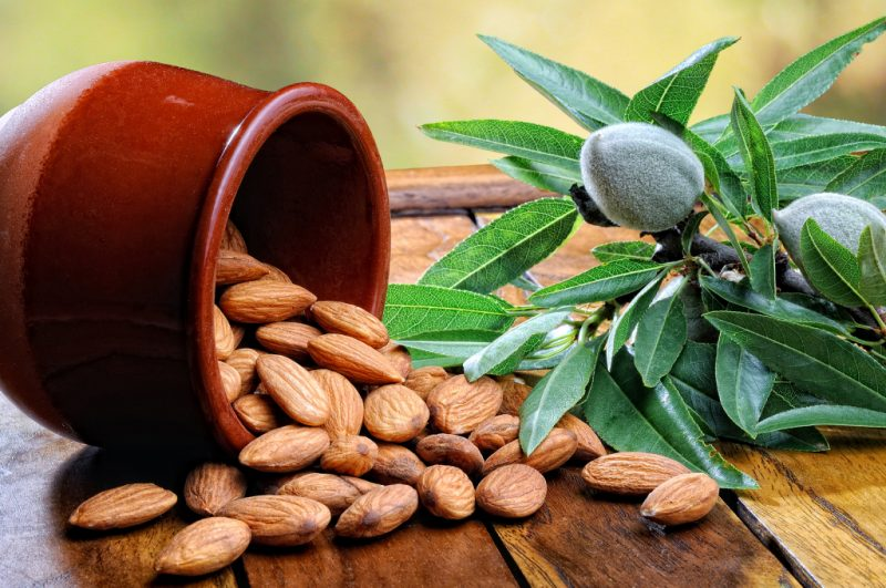 миндаль орех полезные свойства и противопоказания для женщин