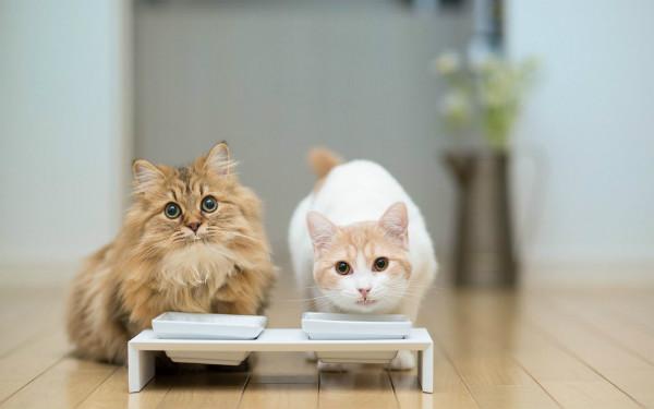 молоко для кошек польза или вред