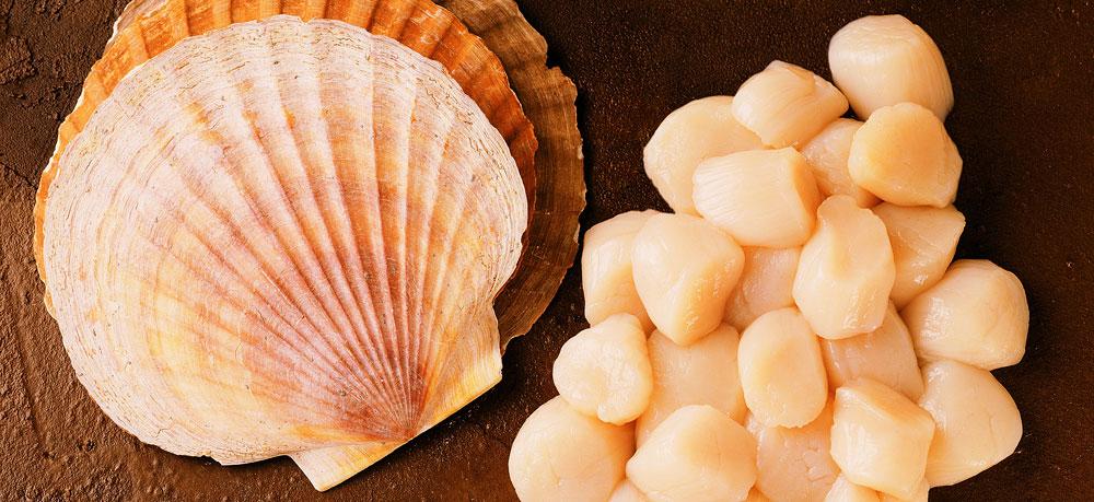 морские гребешки водоросли польза и вред