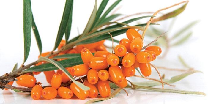 облепиховое масло полезные свойства и противопоказания в капсулах