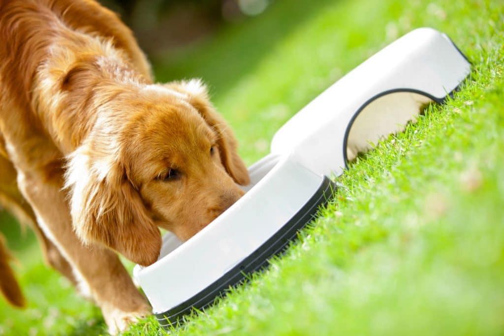 печень польза и вред для собаки